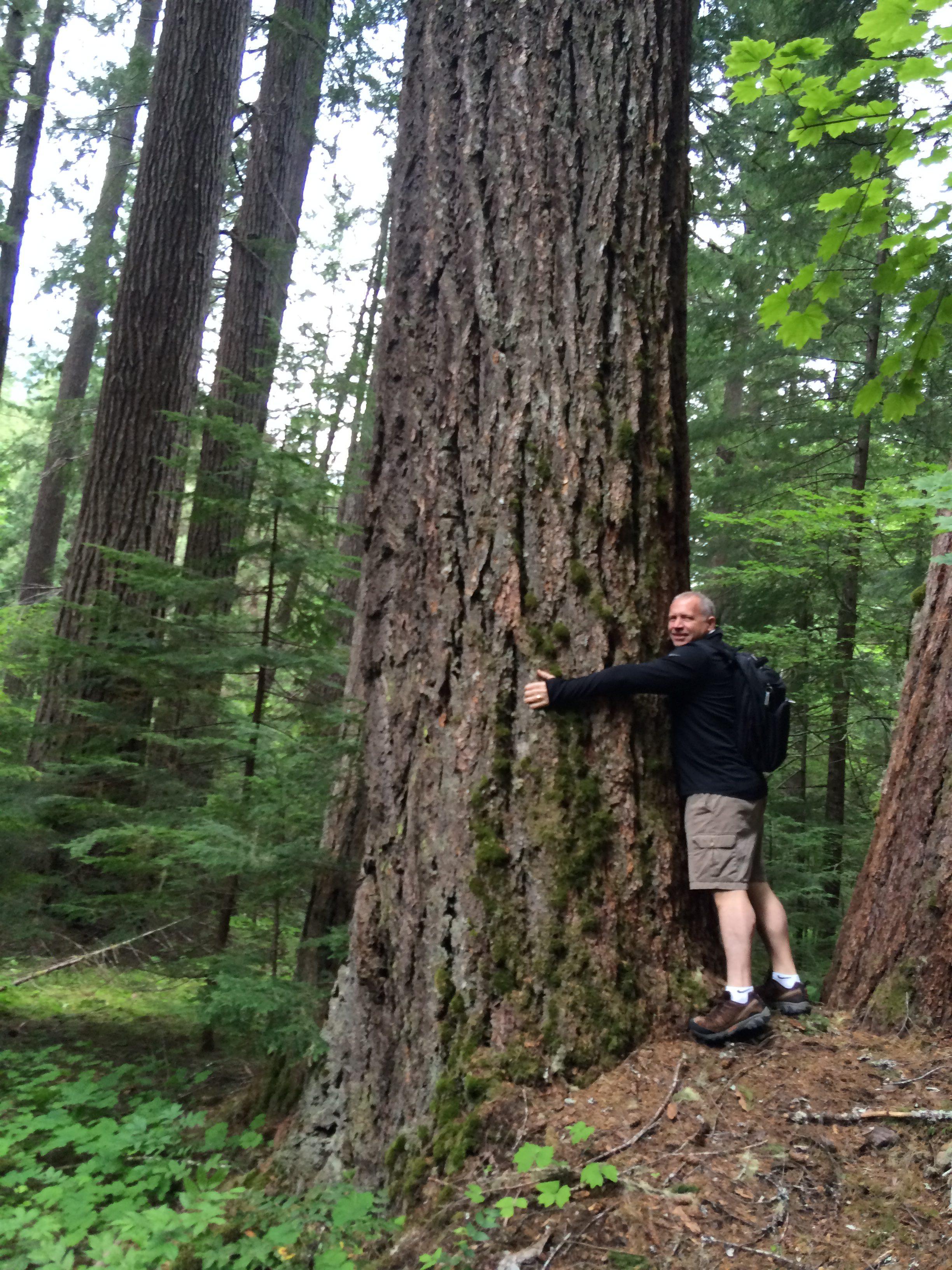 seattle leroy family blog tree hugger